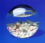 аквамир - подарите целый мир!