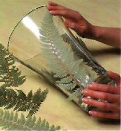 Листья папоротника 2